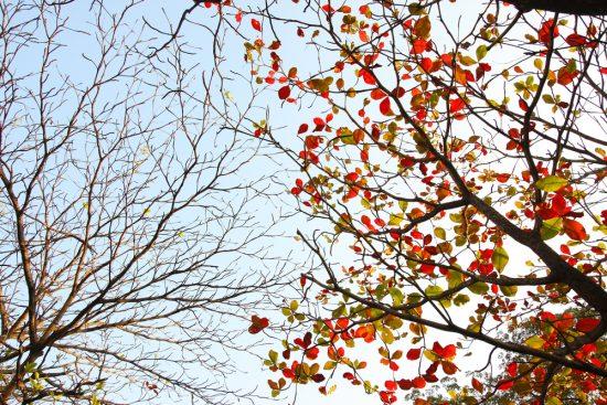 какие деревья не сбрасывают листву