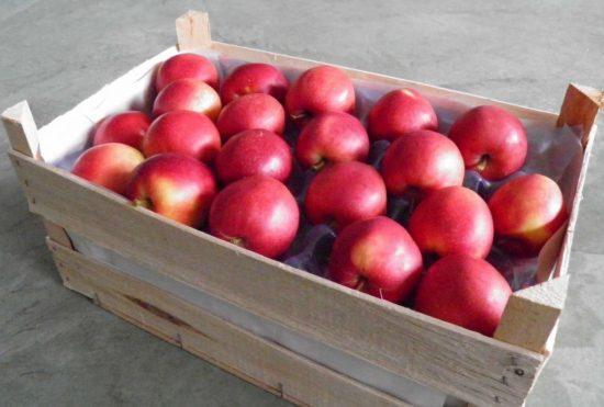 Укладывание яблок