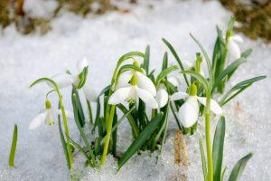 Какая будет весна 2020 года: ранняя или поздняя, сроки потепления по регионам, особенности каждого месяца