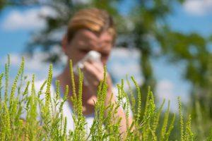 Календарь цветения для аллергиков 2020 в Москве: таблица по месяцам и дням с указанием растений, профилактика аллергии