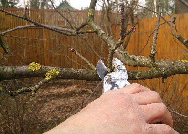 Как ухаживать за яблоней осенью, чтобы был хороший урожай: подготовка к зиме и подкормка