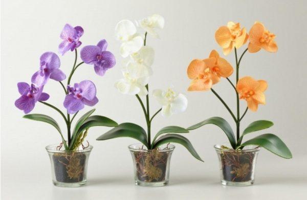 gorshok dlja orhidei