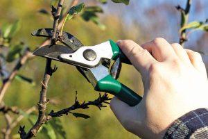 Как правильно делать обрезку старых яблонь осенью