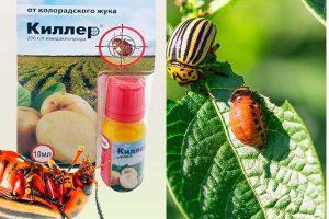 Препарат Киллер от колорадского жука
