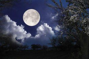Лунный календарь садовода и огородника на июль 2017 года