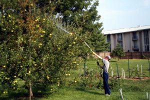 Как и чем обработать яблони осенью от болезней и вредителей