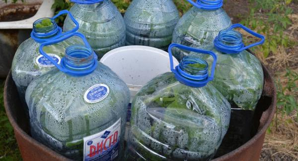 Огурцы в 5 Литровых Бутылках