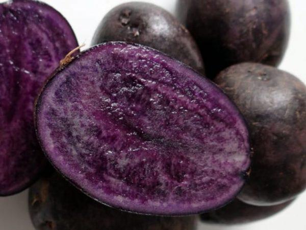 Сорт Картофеля Фиолетовый