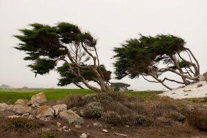 Деревья на ветру