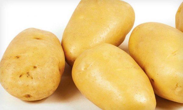 сорт картофеля зекура